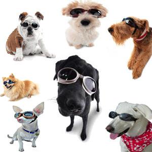 doggle_dogs