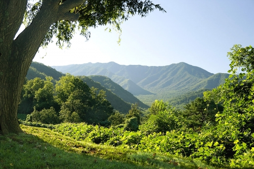 Smokies_Green_Vista-500x334