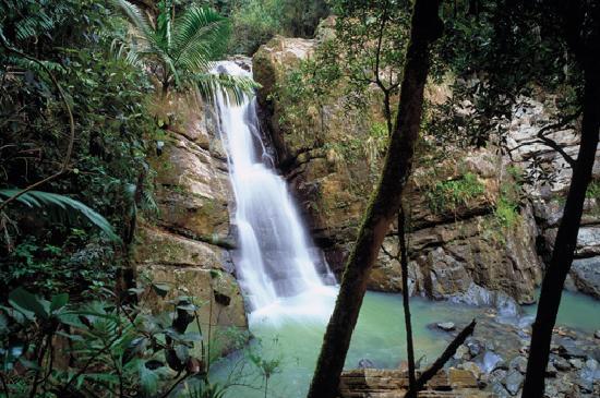 el-yunque-rainforest