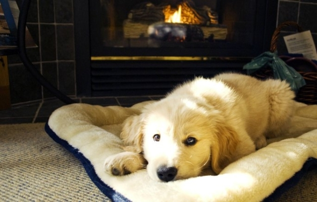 puppy-by-fireplace-pointe-west